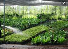 ابحث عن أخصائي نباتات زينة وتشجير بجميع أنواعها