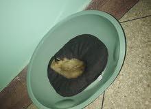 مكان نوم القطط