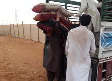 نقل عفش بالرياض باكستاني