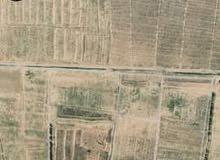 ارض 150فدان للبيع بجوار قرية دلتا مارينا علي الطريق الدولي الساحلي