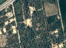 للبيع أراضي بساتين تصلح للسكن (فيلا) او دار سكني في كربلاء المقدسة