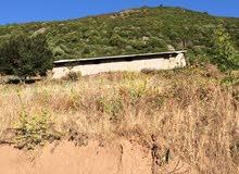 اسطبل مع قطعة ارض زراعيه فيها أشجار زيتون