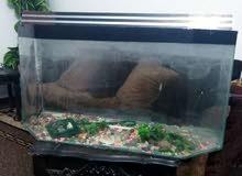 حوض سمك فاضي قياسه الارتفاع 45 العرض 90سم للبدل على كنار