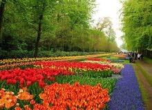 مشاتل النخيل لتنسيق الحدائق