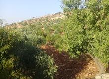 قطعة ارض للبيع مشجره جميع أنواع الشجر