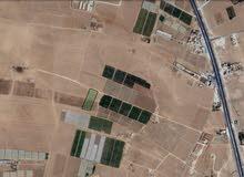 أرض سكنيه طريق المطار جنوب عمان. (ارينبه )