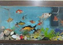 حوض سمك مع كامل اغراضه للبيع مع السمكات