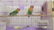 Green Fischer Pair