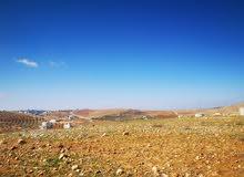 ارض للبيع في شفا بدران حوض المقرن بدران مساحه 500 متر موقع مميز