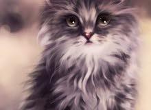 محتاج اككر محتاج  قطه انثى للبيع اني اريد