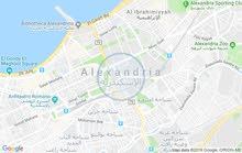 السيوف الشماعة - الاسكندرية