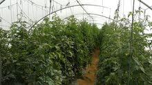 مزرعة  10فدان  للبيع بطريق مصر اسيوط الغربي سعر الفدان 30الف 01028783029