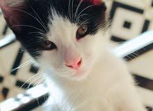 قطط للتبني بالمجااااااان