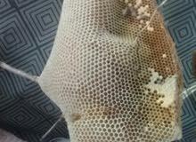 للبيع عسل