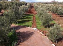 مزرعة صغيرة  للبيع في طريق اريكا