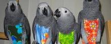 ادوية جميع الطيور