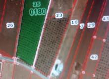 أرض زراعيه ( إربد - النعيمه ) حوض رقم80 مرج الصماديه قطعه رقم 25