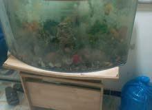 حوض سمك حجم كبير مع مناظر واحجار زينه