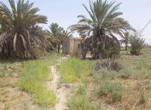 ارض زراعية مع دار للبيع