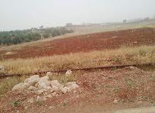 قطعة أرض بموقع مميز في أم قنطره - جرش للبيع