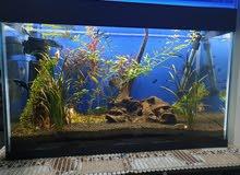 Platend Aquarium