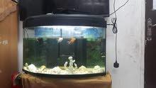 حوض سمك كبير مع أسماك