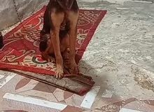 ريد اروسه اب قطه او كلب زينه