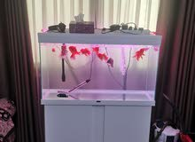 European made 100 cm Ciano aquarium for sale with external filter and additional Led light