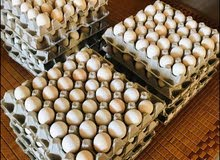 Desi Chicken Eggs For Sale