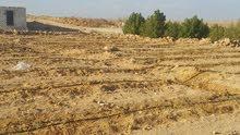 ارض جاهزه لزراعه تخصيص خالصه بها مياه ،كهرباء