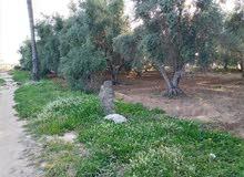اراضي بالتقسيط بدير البلح
