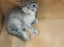 قطه جميله