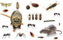 شركة مكافحة حشرات بجدة افضل وارخص مع الضمان شركة جوهرة الخليج 0501090022