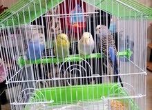 4 birds with cage