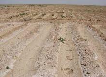 100 فدان على طريق الوحات بها مياه مسجله بالمجلس كامله المرافق