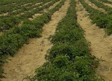 مزرعه 10 فدان للبيع فى وادى النطرون