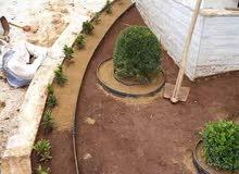 تهيئة الحدائق المنزلية وتقليم الاشجار واعادة غرس اشجار الزينة