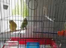 اقفاص طيور مستعملة