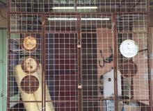 محل للبيع سوق ام قصر شارع 12 مقبل السنتر