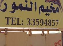 مخيمات للبيع عدد مخيمين كامل جميع ملحقاتهم مع جنريتر عدد 2 كامل معداتهم