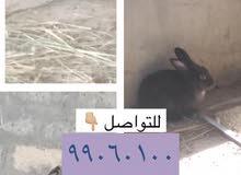 بيع أرانب منتجات