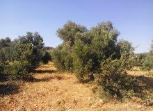 ارض للبيع في بدر (الحكر) , 5 دونمات مساحة الارض