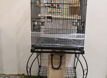 4 طيور بادجي بصحه ممتازه جدا وبقفص كبير للتواصل 51244103