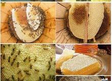 اجود انواع العسل اليمني