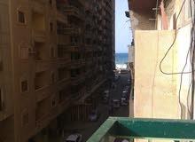 ميامي اسكندرية
