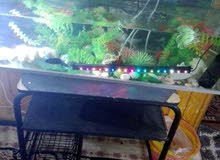 حوض سمك رائع بكافة مشتملاته والاضاءه