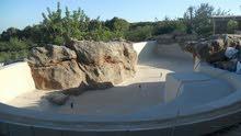 شركة (الحاج الطيب) للمقاولات و انشاء احواض السباحة