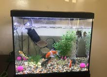 11 fish & aquarium with filter & stone total 800