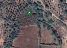 ارض زراعية مصياف بجانب نبع حيلين الزينة
