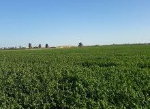 قطعة أرض 60 فدان للاستثمار والتجارة قابل للتجزئه علي الطريق الرئيسي مباشر